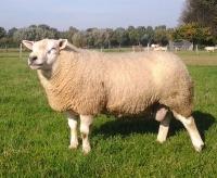 04899-00030 Malvern 30 Texel selectie Index van 2012 is 121