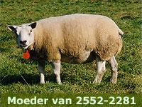 Wensink: 2552-2281