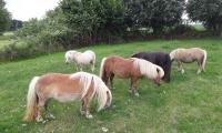 Bij warm weer proberen we voor schaduw te zorgen voor de pony